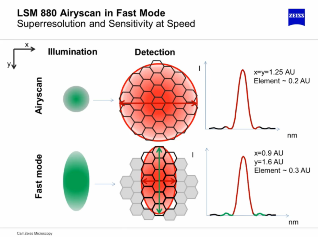 Airyscan: Superresolution (top) vs. Fast Mode (bottom)